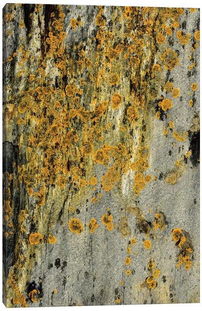 Lichen On Stone Canvas Art Print