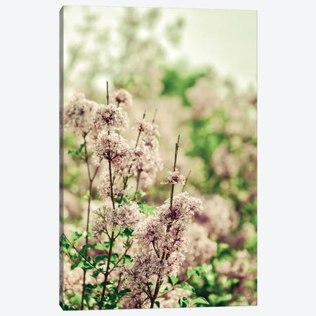 Hush My Love Lavender Canvas Print #OJS242} by Olivia Joy StClaire Canvas Artwork