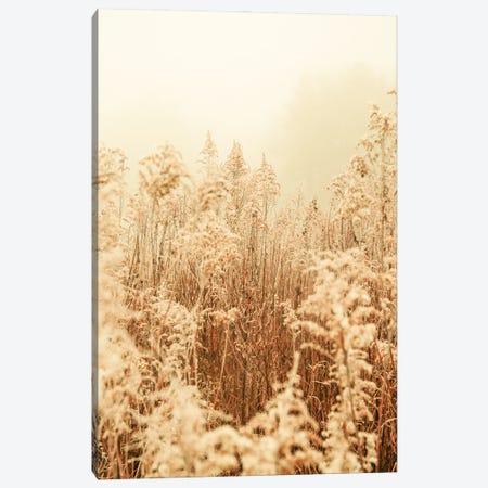 Nordic Winter I Canvas Print #OJS248} by Olivia Joy StClaire Canvas Artwork