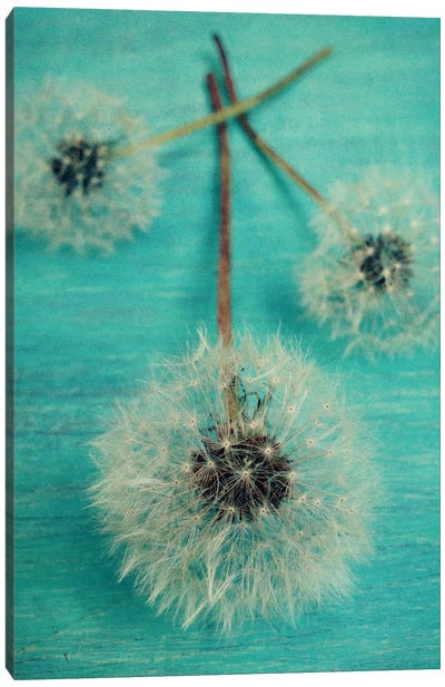 Make A Wish Canvas Art Print