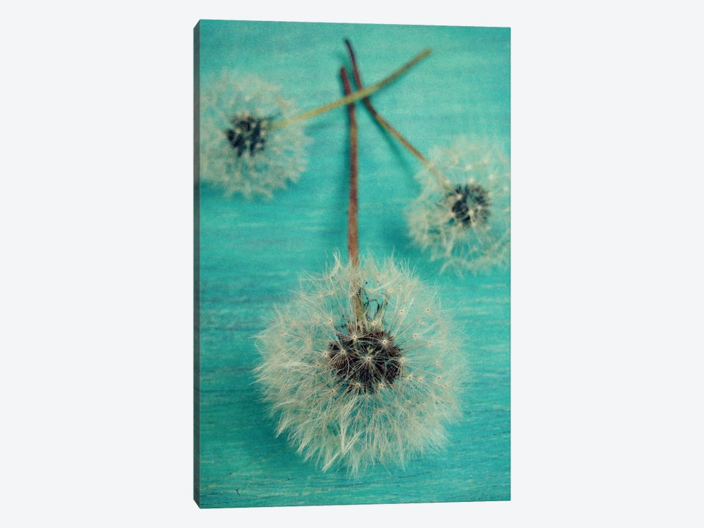 Make A Wish by Olivia Joy StClaire 1-piece Canvas Art
