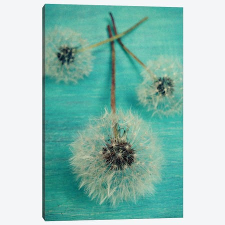 Make A Wish Canvas Print #OJS24} by Olivia Joy StClaire Canvas Wall Art