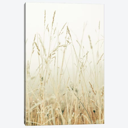 Winter Field I Canvas Print #OJS251} by Olivia Joy StClaire Art Print
