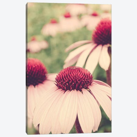 Summer Botanical I Canvas Print #OJS258} by Olivia Joy StClaire Canvas Print