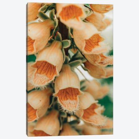 Summer Botanical III Canvas Print #OJS261} by Olivia Joy StClaire Canvas Artwork