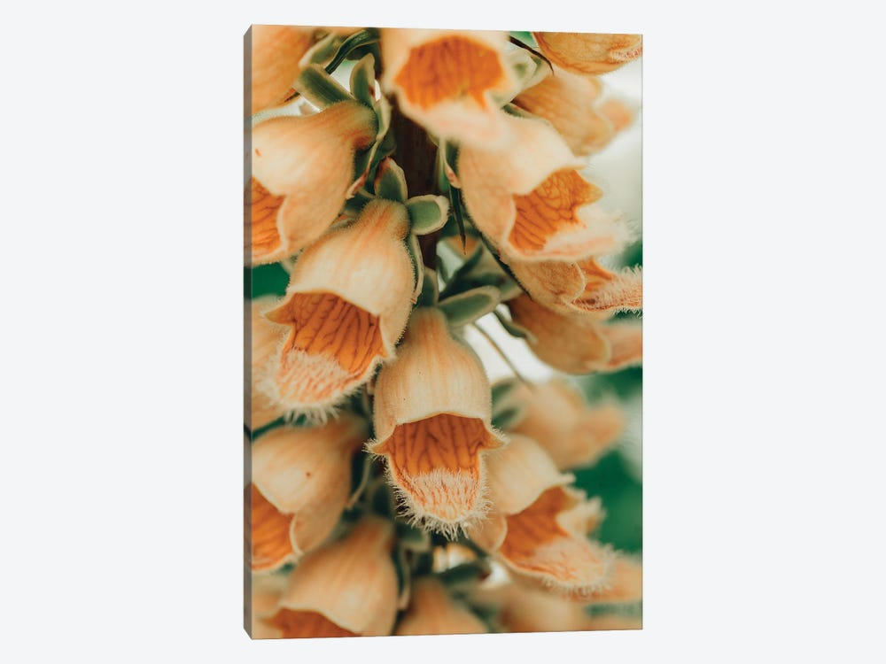 Summer Botanical III by Olivia Joy StClaire 1-piece Canvas Wall Art