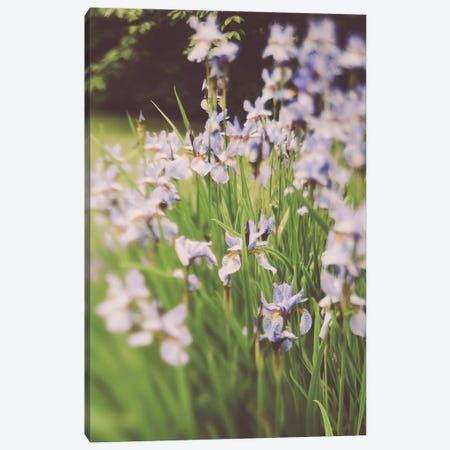 Garden Party II Canvas Print #OJS263} by Olivia Joy StClaire Canvas Art