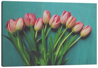 Pink Tulips I Canvas Art Print