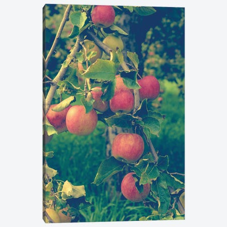 Apple Harvest Canvas Print #OJS2} by Olivia Joy StClaire Canvas Art Print