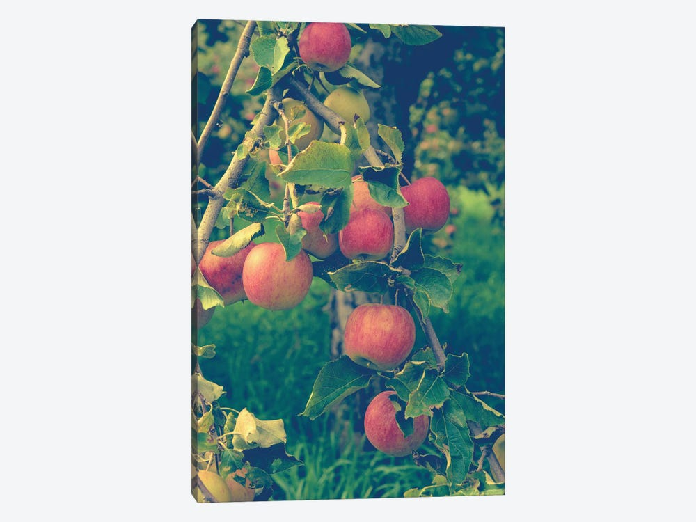 Apple Harvest by Olivia Joy StClaire 1-piece Art Print