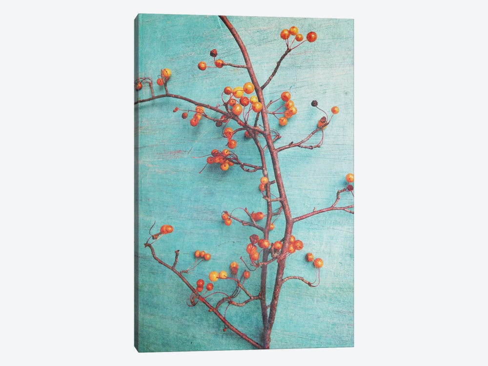 She Hung Her Dreams On Branches by Olivia Joy StClaire 1-piece Canvas Print