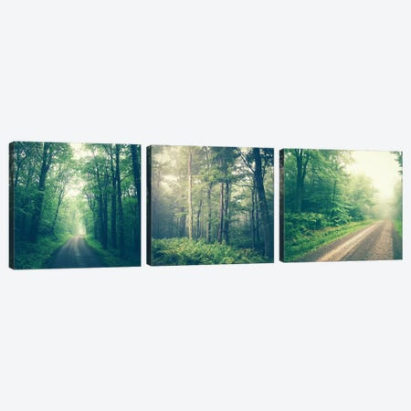 Forest Road Triptych Canvas Print Set #OJS3HSET001} by Olivia Joy StClaire Canvas Artwork