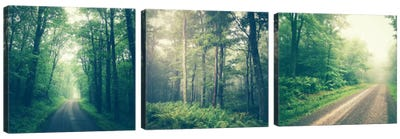 Forest Road Triptych Canvas Art Print