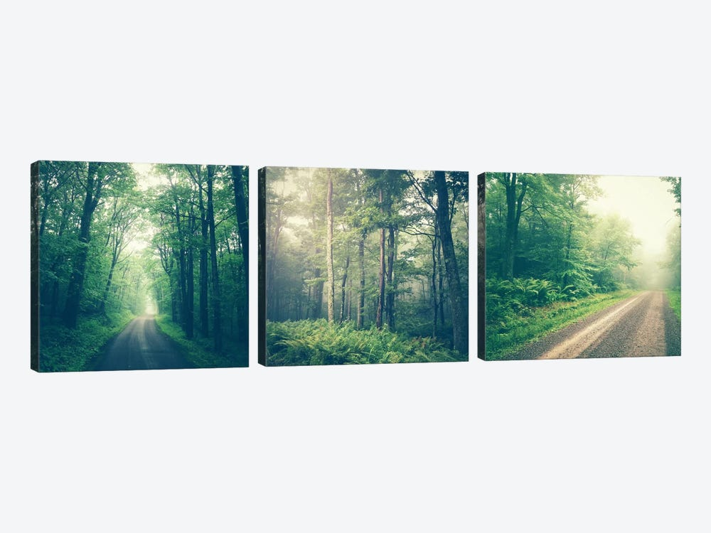 Forest Road Triptych by Olivia Joy StClaire 3-piece Canvas Print