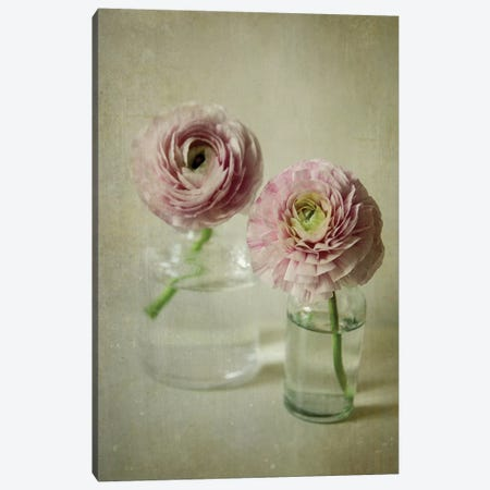 Spring Bloom Canvas Print #OJS40} by Olivia Joy StClaire Canvas Print