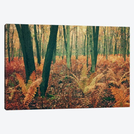 Autumn Woodland Canvas Print #OJS50} by Olivia Joy StClaire Canvas Wall Art