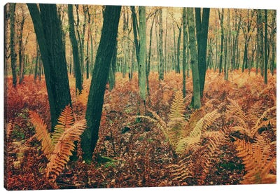 Autumn Woodland Canvas Art Print