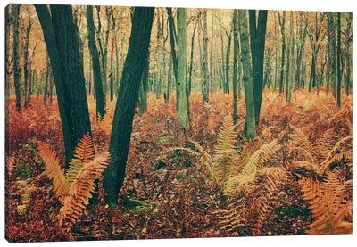 Autumn Woodland Canvas Art Print