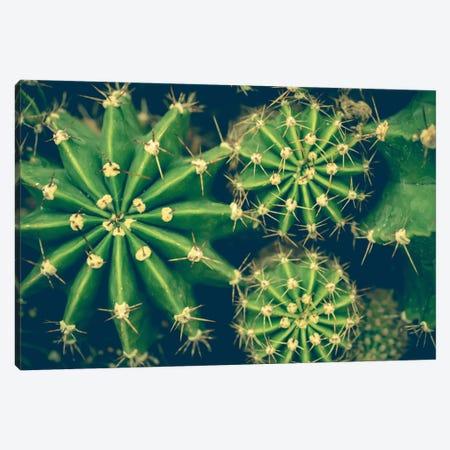 Cacti Canvas Print #OJS55} by Olivia Joy StClaire Art Print