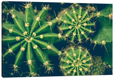 Cacti Canvas Print #OJS55