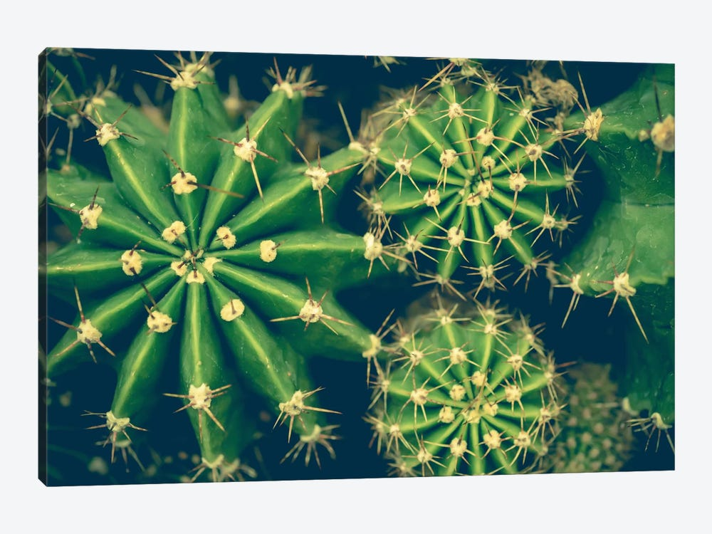 Cacti by Olivia Joy StClaire 1-piece Canvas Wall Art