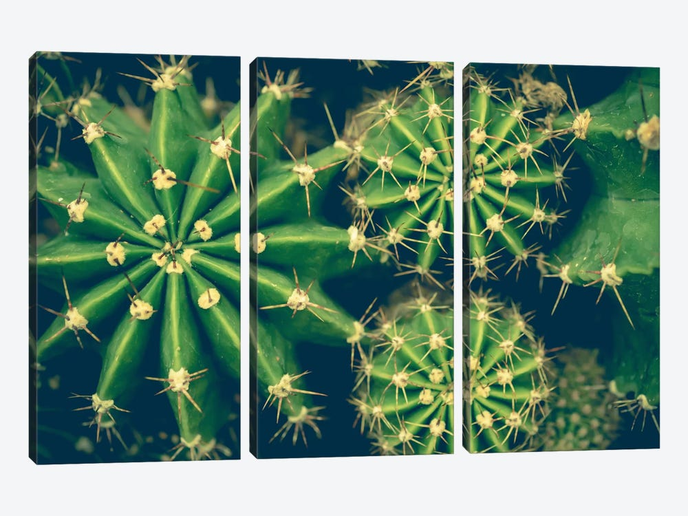 Cacti by Olivia Joy StClaire 3-piece Canvas Wall Art