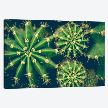 Cacti Canvas Print #OJS55} by Olivia Joy StClaire Art Print