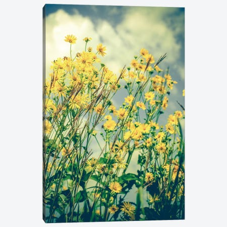Free Spirit Canvas Print #OJS60} by Olivia Joy StClaire Canvas Print