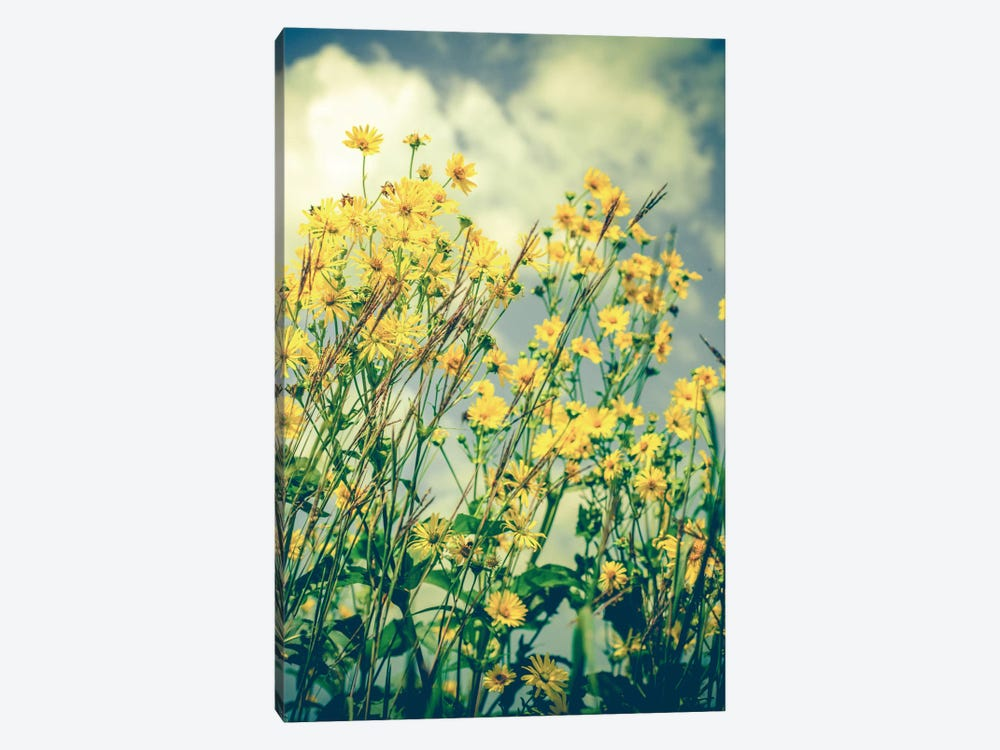 Free Spirit Canvas Wall Art by Olivia Joy StClaire | iCanvas