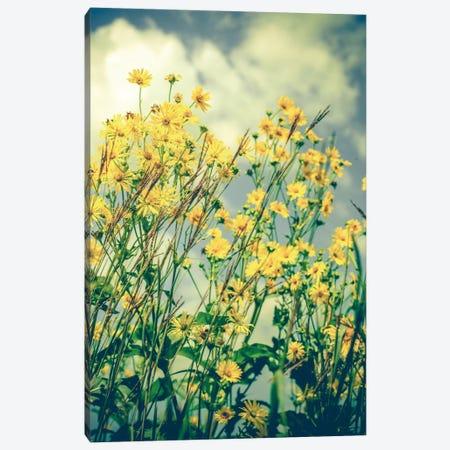 Free Spirit Canvas Print #OJS60} by Olivia Joy StClaire Canvas Print