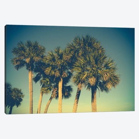 Palm Trees Canvas Print #OJS69} by Olivia Joy StClaire Art Print