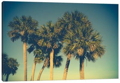 Palm Trees Canvas Print #OJS69