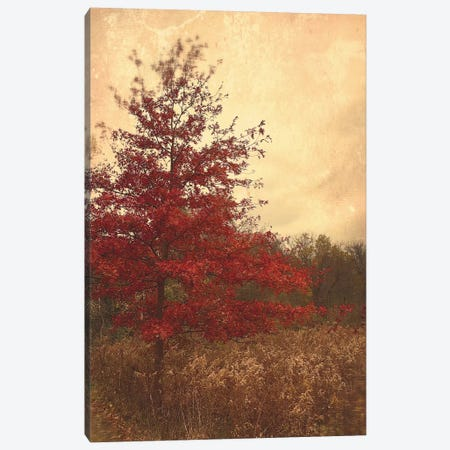Red Oak Canvas Print #OJS70} by Olivia Joy StClaire Canvas Artwork