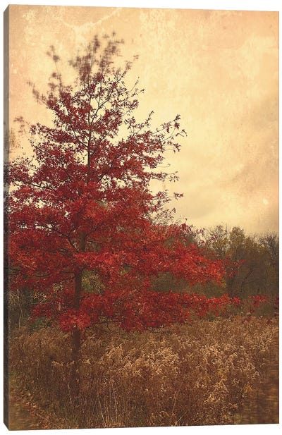Red Oak Canvas Art Print