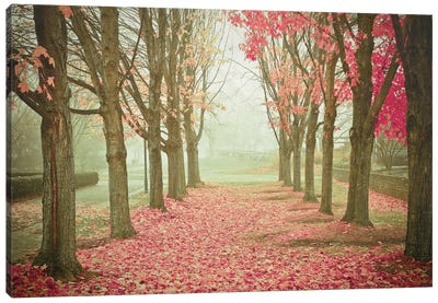 Scarlet Autumn Canvas Print #OJS72