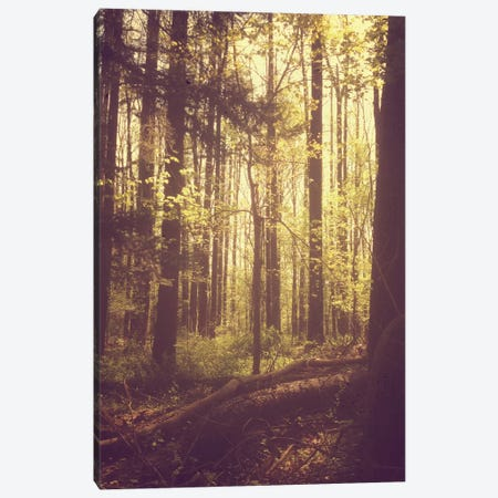 She Experienced Heaven On Earth Among The Trees Canvas Print #OJS74} by Olivia Joy StClaire Art Print