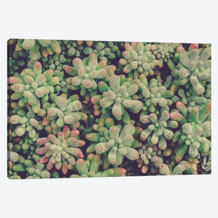 Succulents Canvas Print #OJS77} by Olivia Joy StClaire Art Print