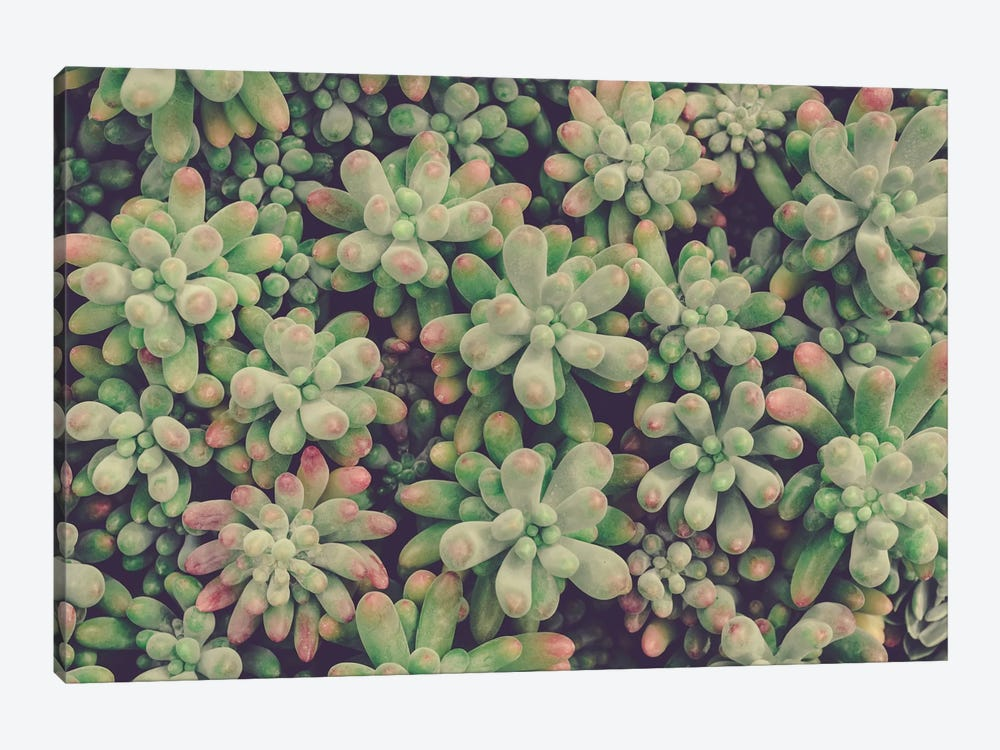 Succulents by Olivia Joy StClaire 1-piece Canvas Artwork
