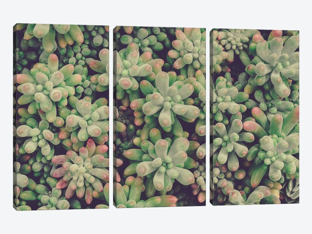 Succulents 3-piece Canvas Art