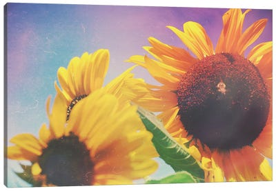 Summer Sunshine Day Canvas Art Print