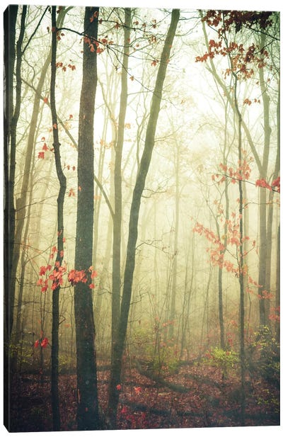 The Woods Are Lovely, Dark, And Deep Canvas Print #OJS81