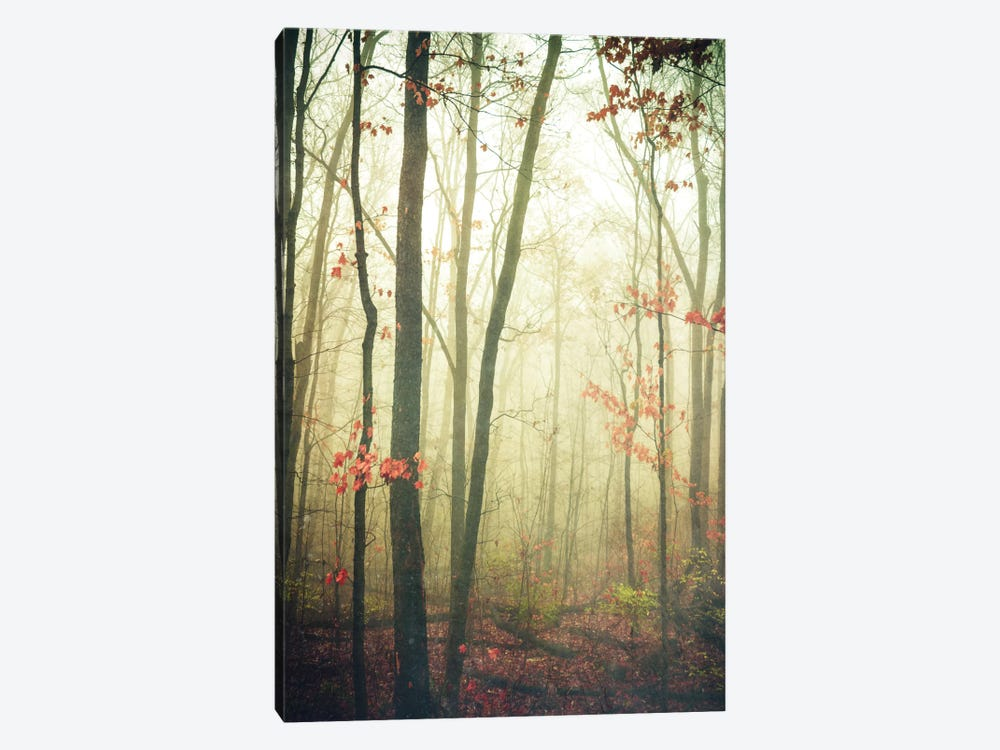 The Woods Are Lovely, Dark, And Deep by Olivia Joy StClaire 1-piece Canvas Art Print