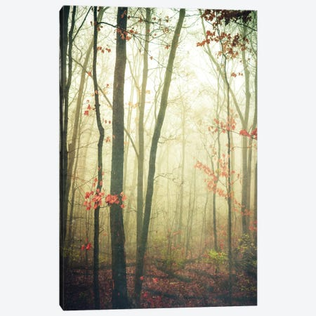 The Woods Are Lovely, Dark, And Deep Canvas Print #OJS81} by Olivia Joy StClaire Canvas Art Print