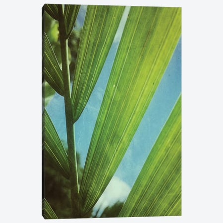 Tropical Outlook Canvas Print #OJS83} by Olivia Joy StClaire Canvas Print