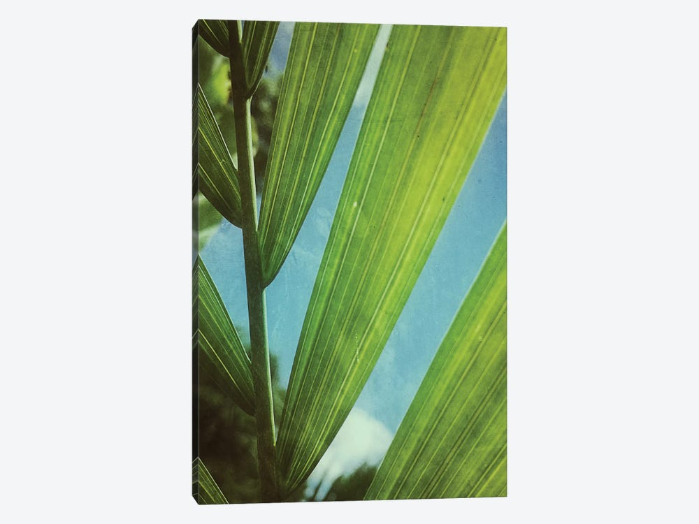 Tropical Outlook by Olivia Joy StClaire 1-piece Art Print