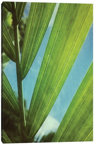 Tropical Outlook Canvas Art Print