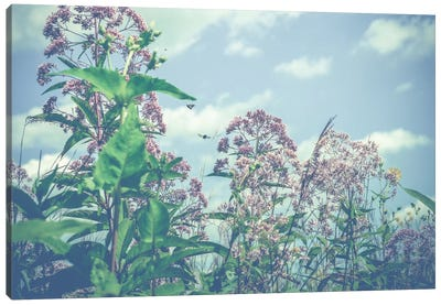 Wild And Free Canvas Print #OJS85