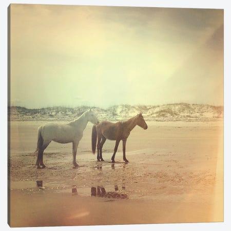 Wild Horses Canvas Print #OJS86} by Olivia Joy StClaire Canvas Art