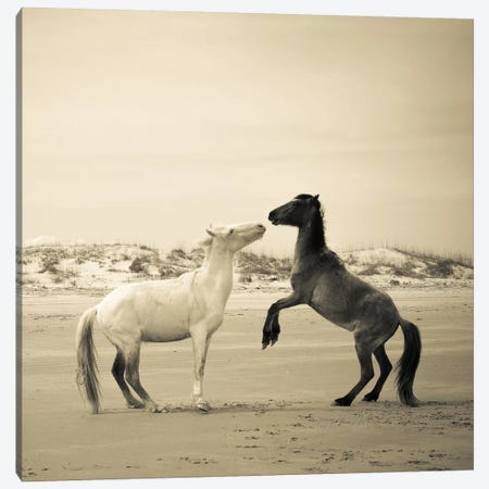 Wild Horses IV Canvas Print #OJS87} by Olivia Joy StClaire Canvas Wall Art