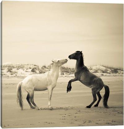 Wild Horses IV Canvas Print #OJS87